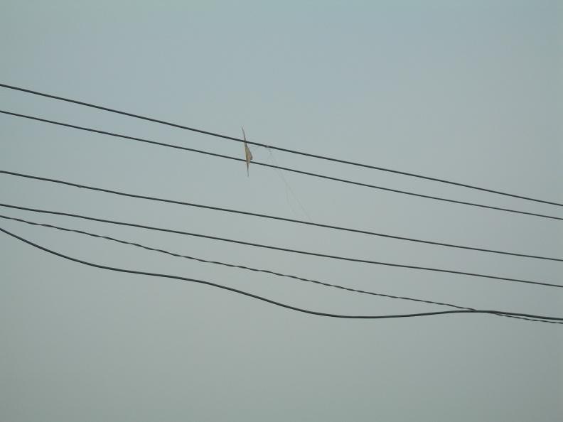 Draci -- Jsem opět v Kotě v Indii tentokrát jen na krátké návštěvě. V této části Indie právě panuje sezóna draků, takže na každém vedení elektřiny jsou uvízlí draci a každé malé dítko běhá po ulici s provázkem v ruce a drakem na druhém konci.